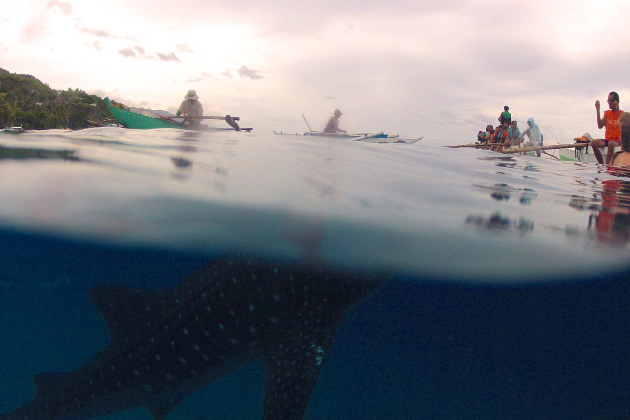 split view of whale shark in philippines