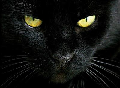 Il Gatto Misteri Segreti E Paranormale Il Conte Rovescio