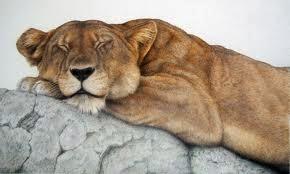 Bendigo Lioness