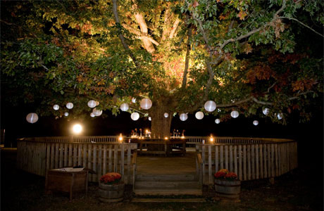 Toni 39 s world dream house ideas for How to hang string lights on trees