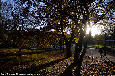 vasaparken, höst, kväll, höstkväll, motljus, solen, solljus, vasastan, stockholm, romantik, romantiskt, kärlekspar, lovers, autumn, evening, sweden, tsyfpl, foto anders n