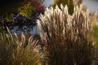 Grosse Gräser storchschnabel und andere stauden gräser und ihre verwendung 1 3