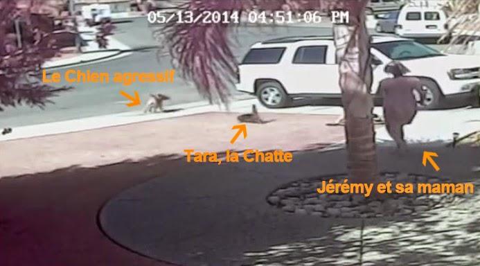 Un Chat sauve son jeune maître attaqué par un Chien
