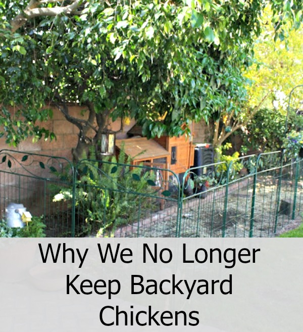 sunny simple life why we no longer keep backyard chickens