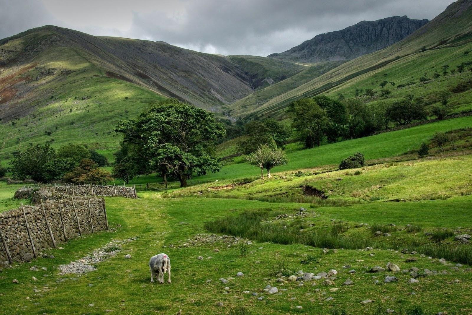 Schapen in de groene berg weiden