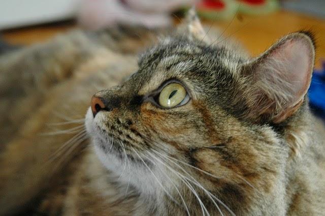 Pisica sta la stapanul care-i da de mancare