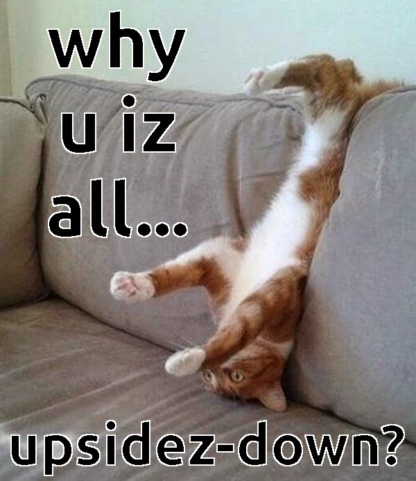 meme of upside down cat
