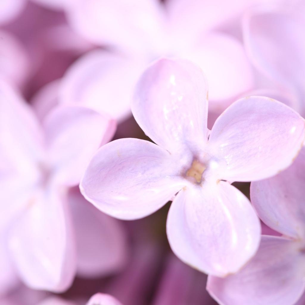 http://2.bp.blogspot.com/-6Rgh4gTPUww/Tl5O9PZnOyI/AAAAAAAAFfA/Kexk81-AFNs/s1600/purple-flower-4.jpg