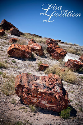Petrified Forest National Park, Arizona, New Braunfels Photography