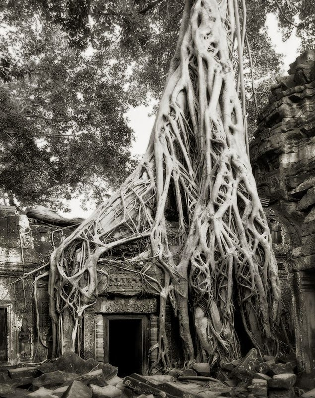 beth moon oldest living trees-3
