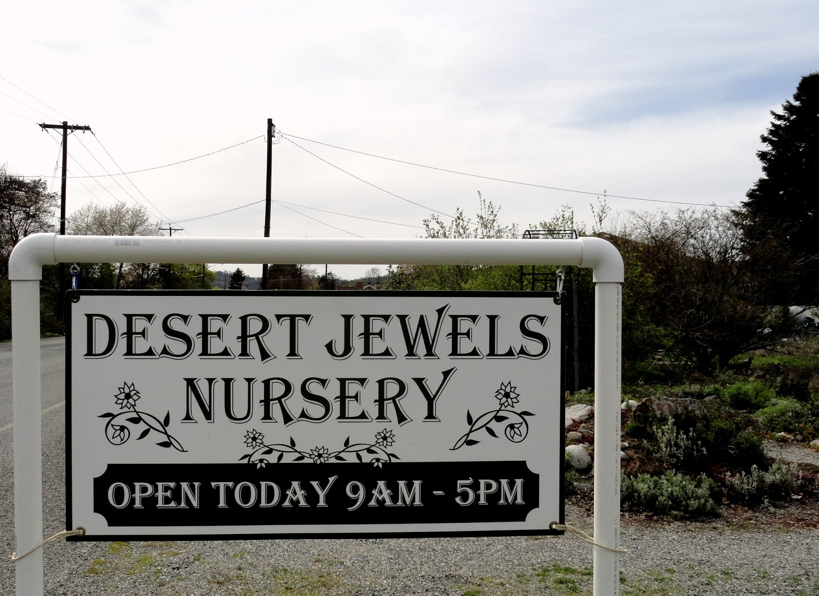 So Close And Yet Far I Had To Wait Ten Months But Ve Finally Visited Desert Jewels Is A Tiny Nursery Run From Home In The Spokane Valley