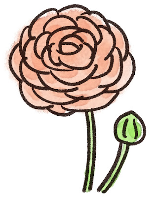 ラナンキュラス(花)