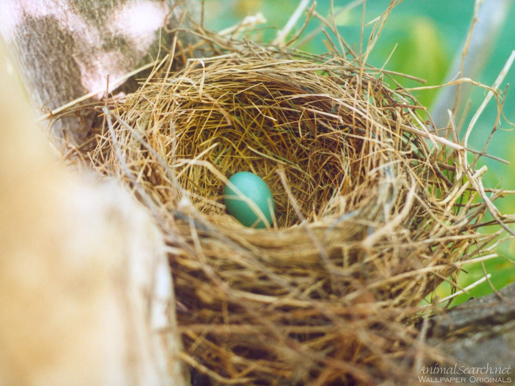 The Charmed Life: Bird Nests on a (Nearly) Worldess Wednesday
