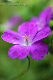 macro photo de fleur photographie de fleur rose photo nature