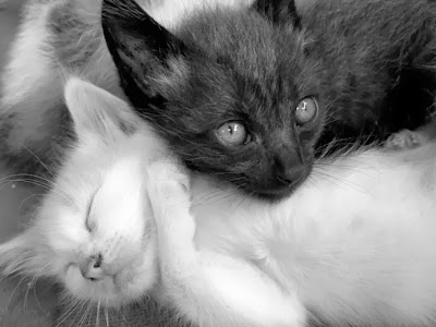 Opostos, gatos branco e preto, Yig Yang, gatos opostos.