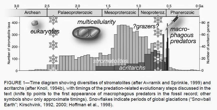 Stromatolite taxa, acritarchs, macrophagous predators, and grazers
