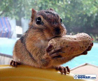 Hamster Makan Kacang
