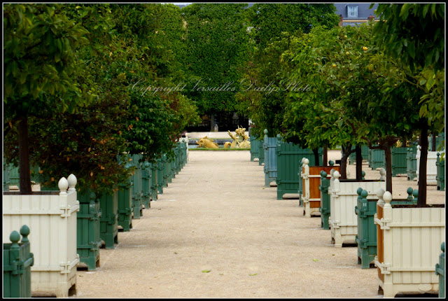 Citrus trees Versailles palace gardens