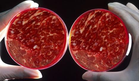 in vitro kött