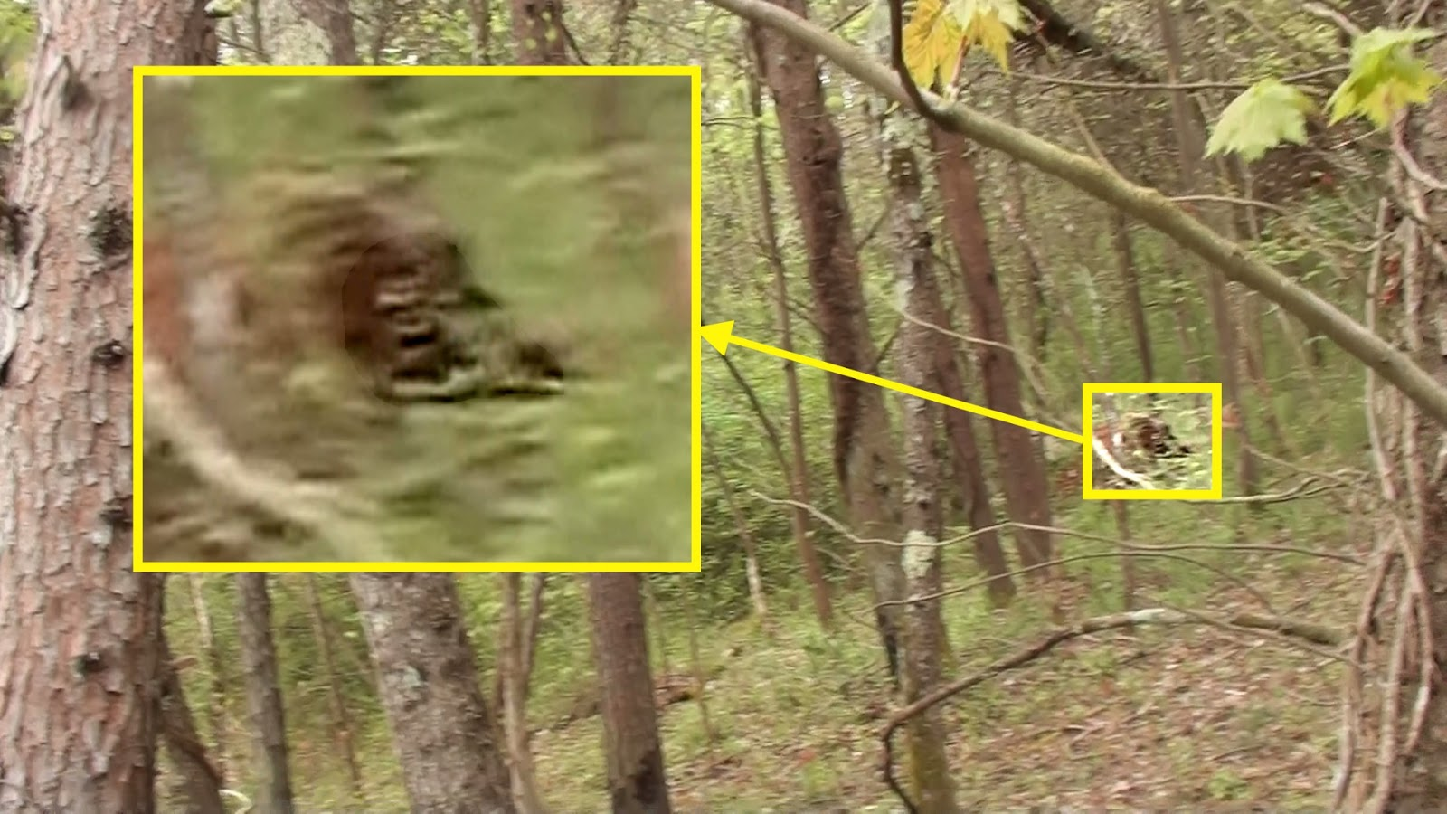 """big foot research """"it just stood there and stared at us,"""" the women recounted in an entry on the gulf  coast bigfoot research organization website """"it was."""