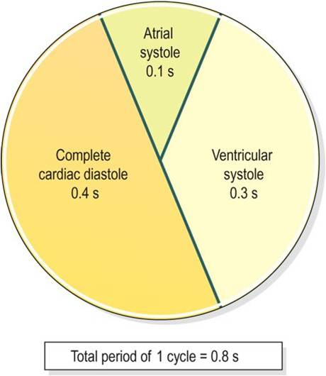 The Cardiac Cycle Anatomy And Physiology