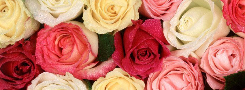 Couverture Facebook Fleur Rose Idee D Image De Fleur