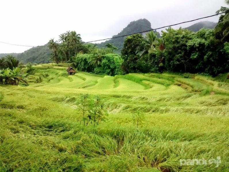 terasiring di bawean