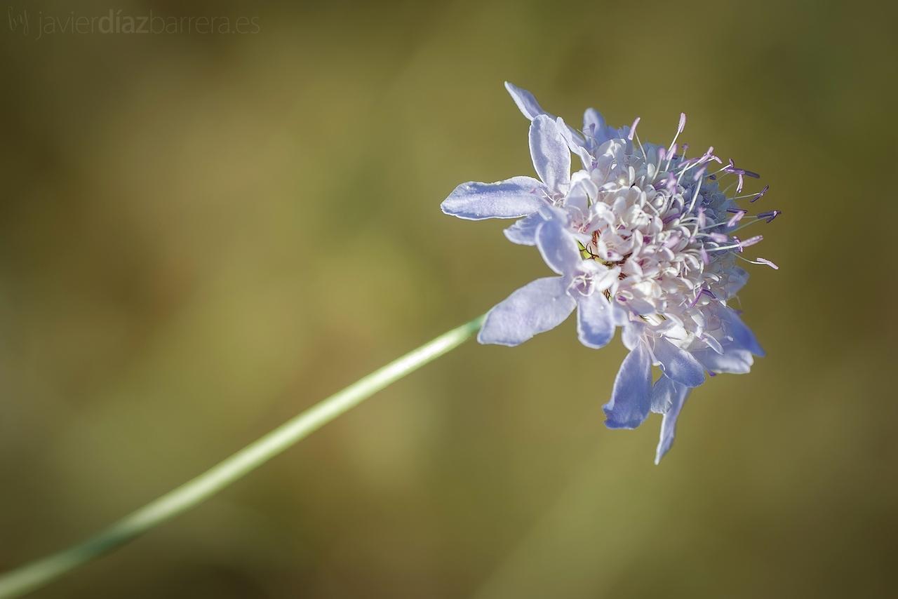 [PDF]flores comunes de puerto rico EdicionesDigitales info - Fotos Y Nombres De Flores Silvestres