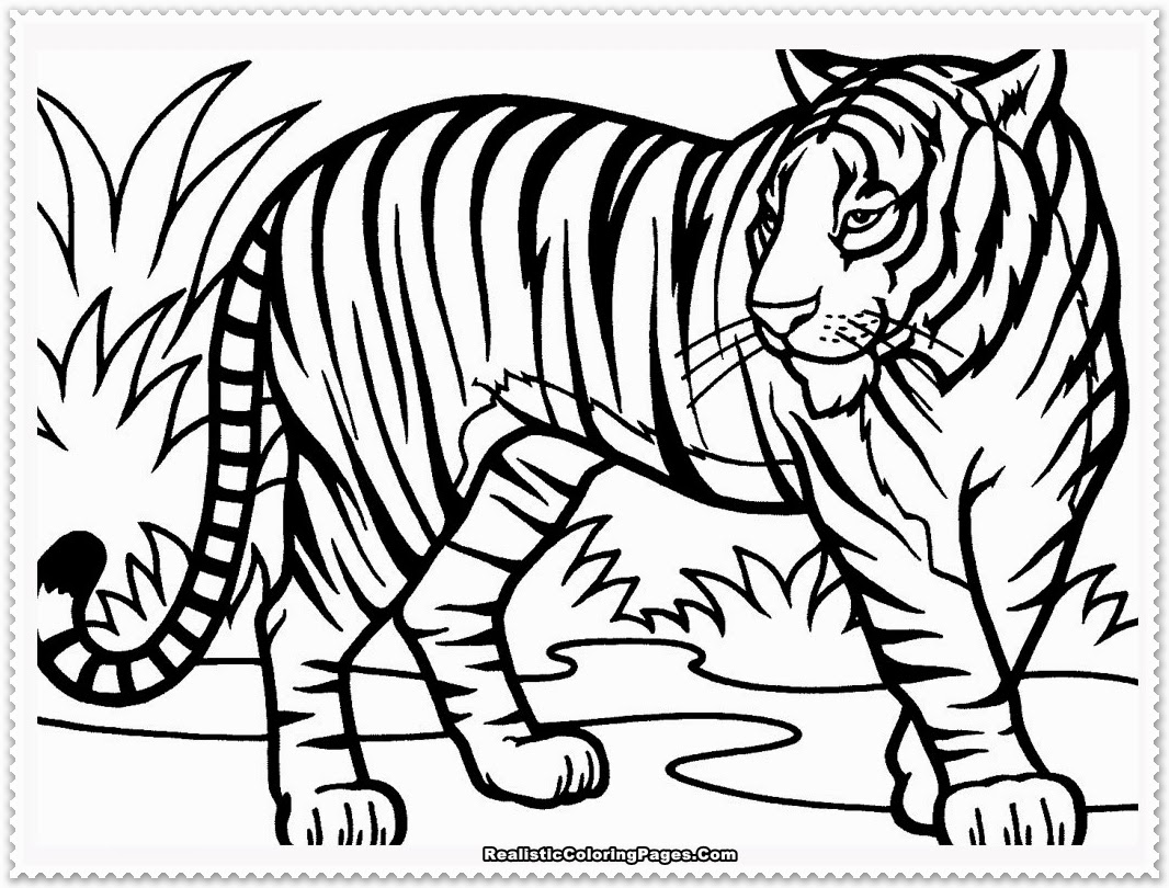 Realistic Tiger Coloring Pages Realistic Coloring Pages Tiger Coloring Pages