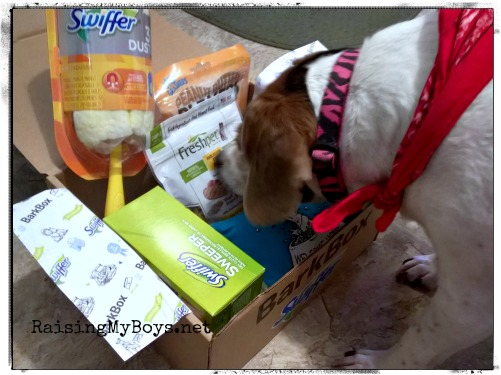 Beagle and Swiffer Bark Box Welcome Home Kit
