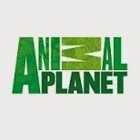 xem kênh Animalplanet