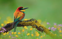 http://7-themes.com/6960608-bird-bee-eater-nature-flowers.html