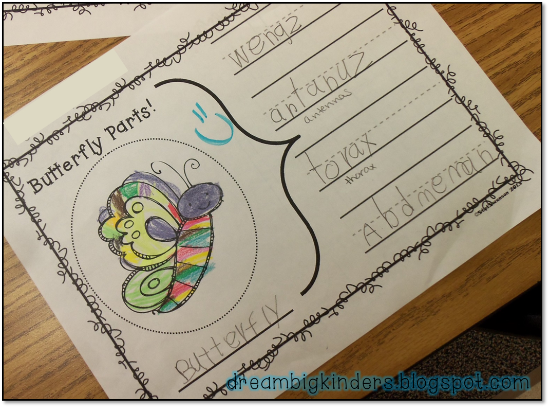 Butterfly Body Parts : Dream big kinders butterfly life cycle nonfiction