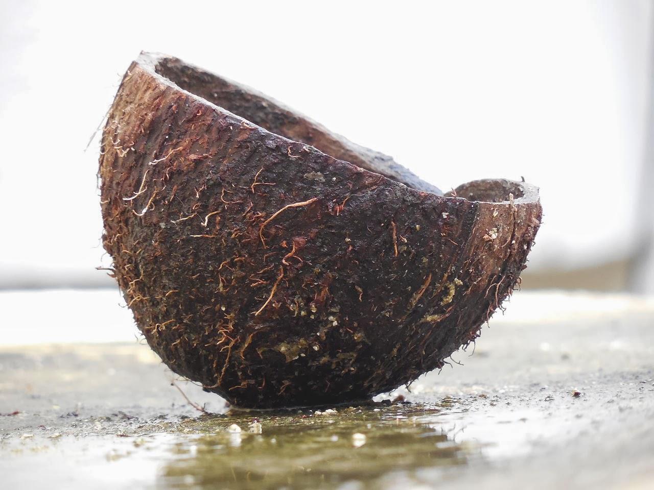 Kokosfett und mittelkettige Fettsäuren (MCT)