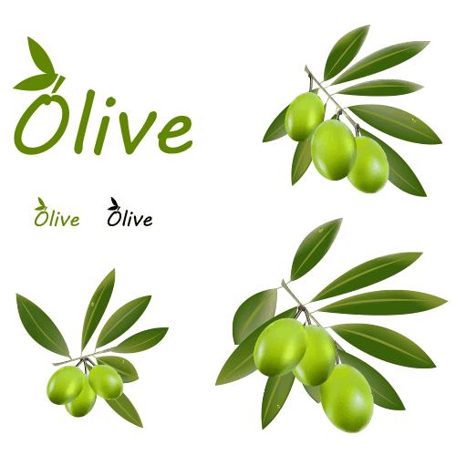 Aceitunas y hojas de olivo - vector