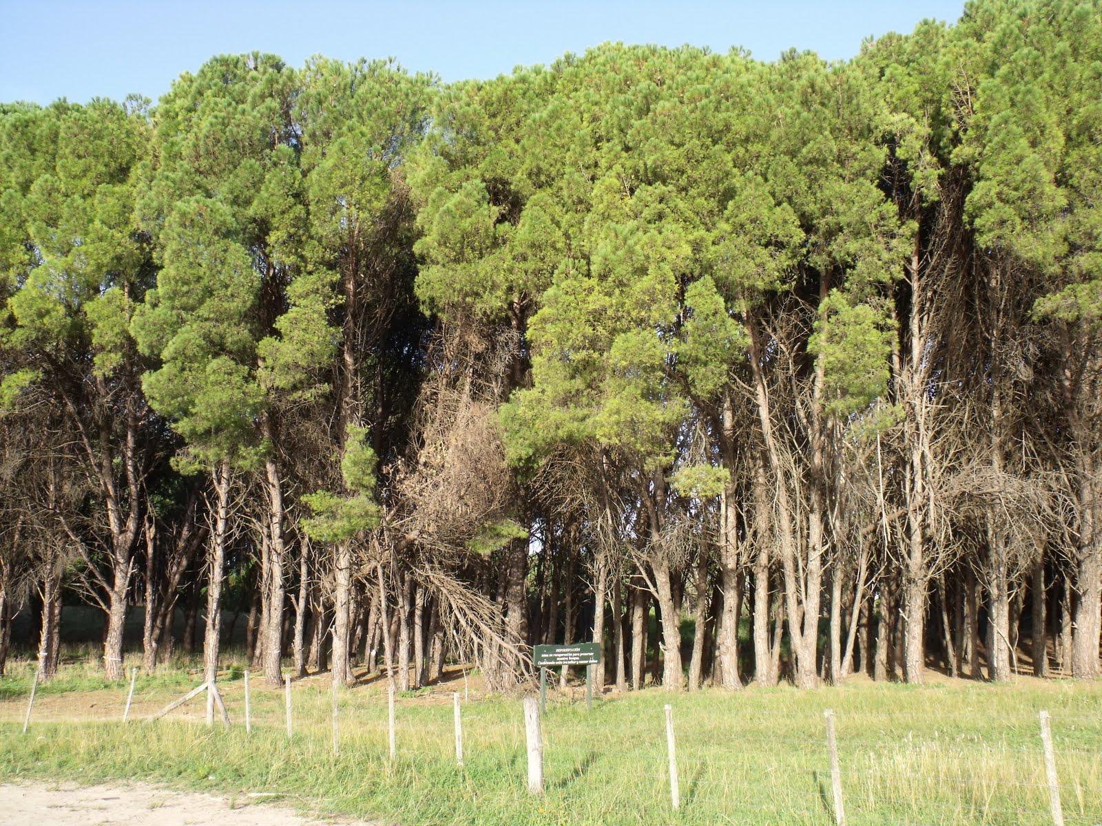Naturaleza y cultura el bosque energ tico de miramar for Viveros zona sur