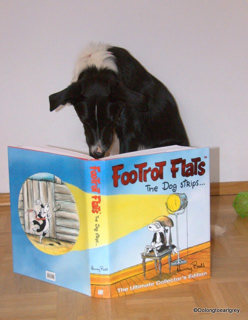 Border Collie reading Footrot Flats