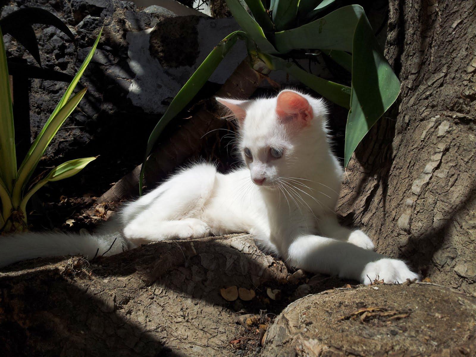 Mi preciosa Coco
