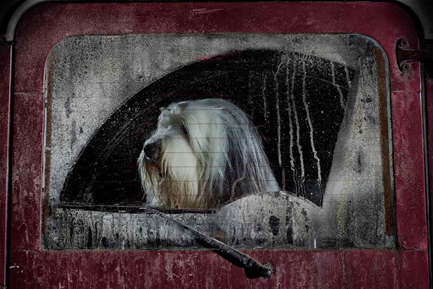 The silence of dogs in cars séries de Martin Usborne