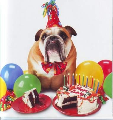 Perro en fiesta de cumpleaños
