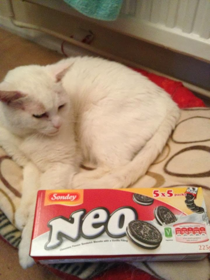 Neo the cat and neo the cookies
