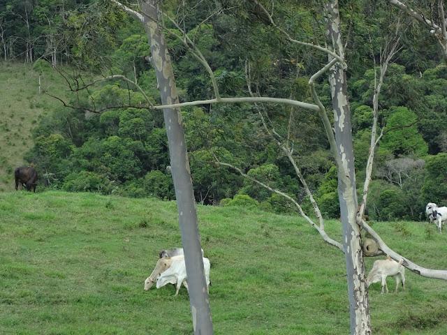 Foto: Danilo Monitor Ambiental PETAR e região
