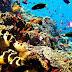 5 Objek Wisata Dengan Sajian Alam Bawah Laut Menakjubkan di Indonesia