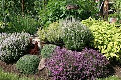 Min lilla örtagård