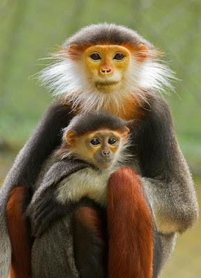 Madre e hijo monos disfrutando el sol de la mañana