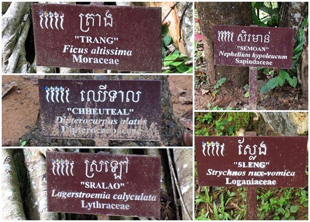 Ta-Som-árboles-Angkor