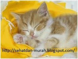 Kucing sahabat setia penghilang stres