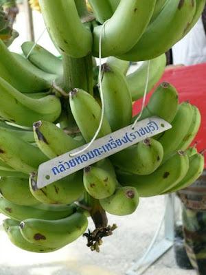 การปลูกกล้วยหอมกะเหรี่ยง