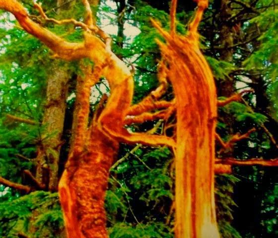 Tree Dancers