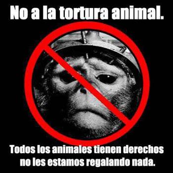 PUNTO FINAL A LA TORTURA ANIMAL